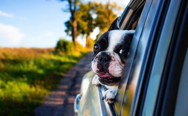 chien-voiture-064940.jpg