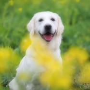 オリンパス愛犬の撮り方