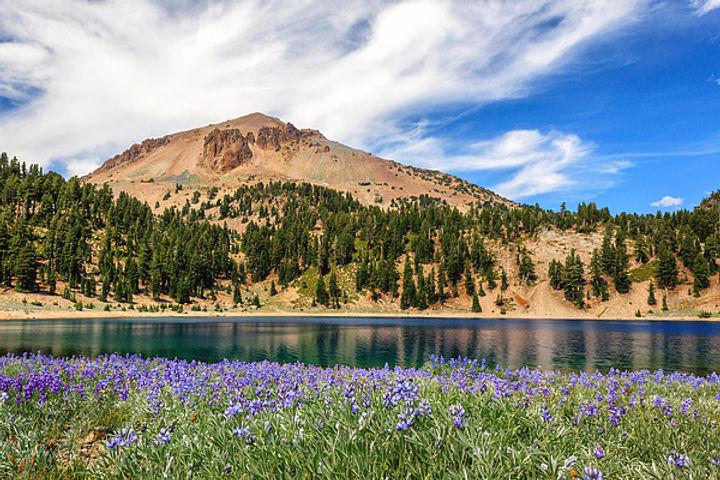 lupines-lake-and-lassen-james-eddy.jpeg