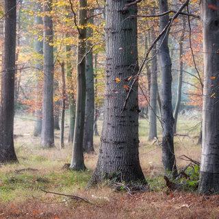 Illebølle skov