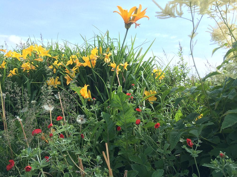 トルニオの花2
