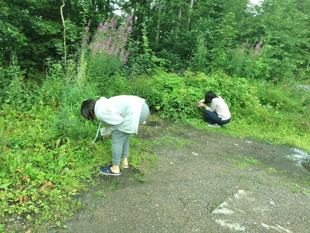 ヘルシンキ郊外にて同宿の韓国人女性と野いちごを摘む(2017年夏)