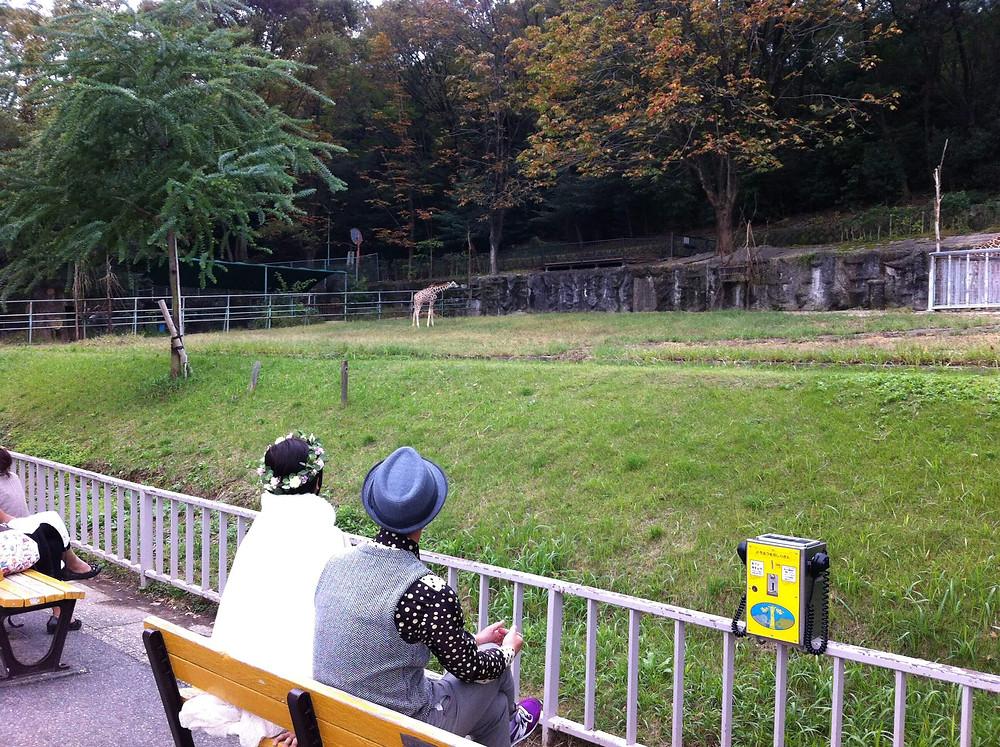 動物園で結婚式