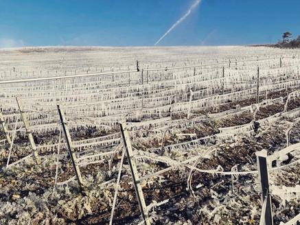 フランス 霜による大被害