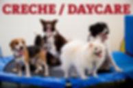 Creche para cães, Creche para cachorro Maringa, Creche para cachorro em Maringá, Creche para cachorro, escola de cachorro, escola para cachorro, Creche cão Maringá, Creche pet, Creche canina, Daycare para cachorro