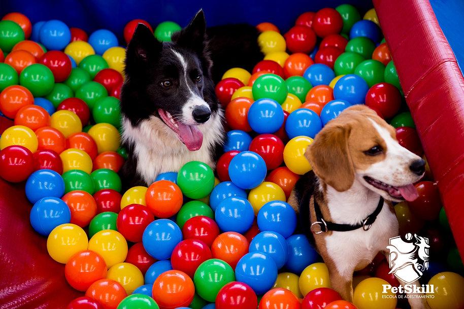 Na Creche para cães da PetSkill temos Estrutura própria para cães em Maringá