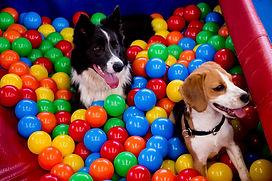 Hospedagem de cachorro PetSkill Maringá
