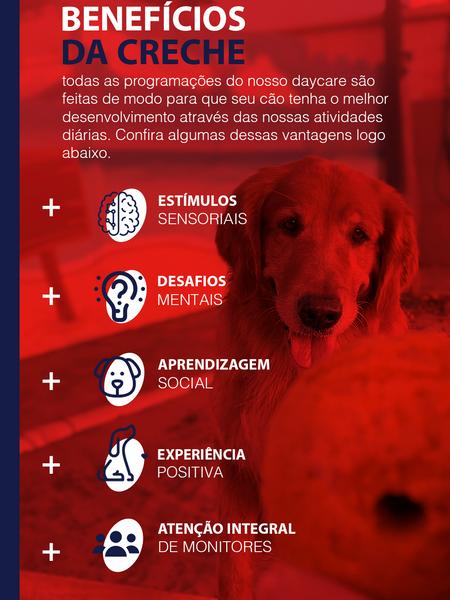 São vários benefícios da Creche e DayCare para cachorro PetSkill Maringá.png