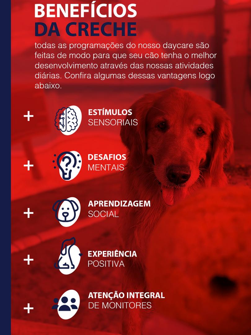 DayCare Creche cachorro PetSkill 4.png