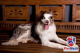 Porquê escolher a creche para cachorro PetSkill em Maringá