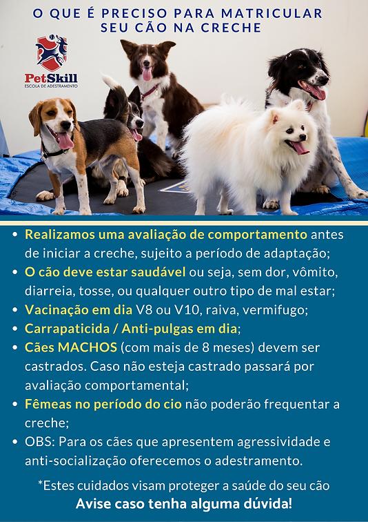 Informações creche daycare cachorro PetSkill, escola canina