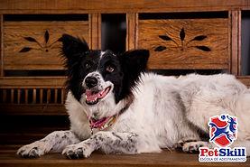 Motivos para escolher a creche para cachorro PetSkill em Maringá