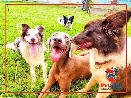 Hotel para cachorro PetSkill