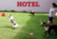 Diária hotel cachorro, Hospedagem para cães, Adestramento, Diária hotel para cães, Hospedagem de animais, Hospedagem para cachorros, Hotel para cachorro, Hotel para cachorro Maringá, Hotel para cães