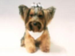 Banho e tosa - PetSkill - Escola canina