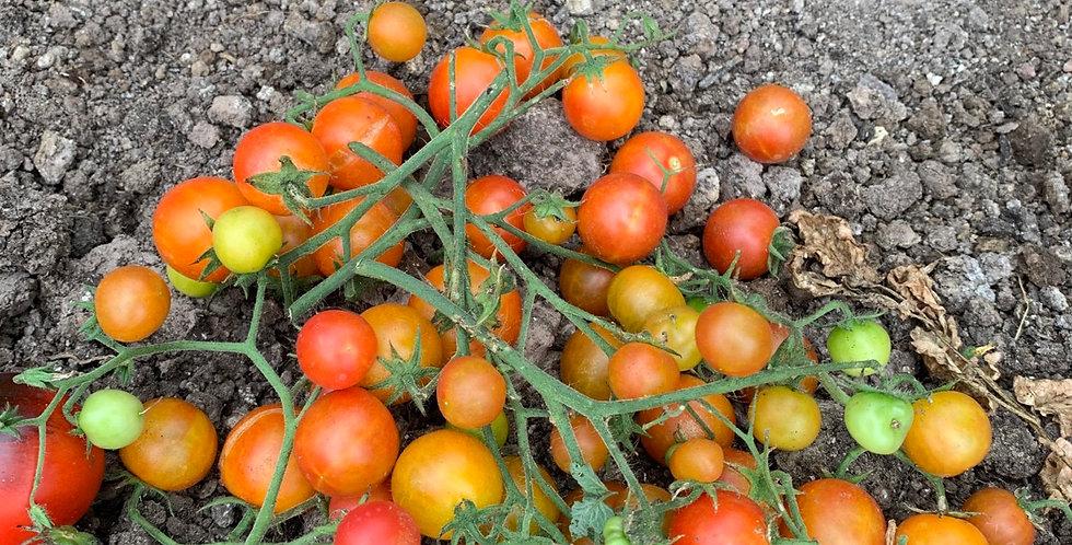 Tomatoes, pint