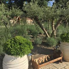 conseils jardin coordination extérieure