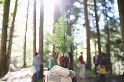 Plantação de árvore
