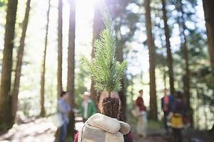 Tree Planting