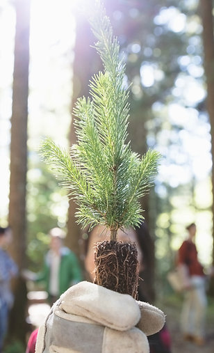 Carbon Offset Gift