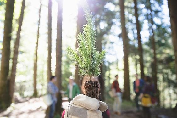 mežaudžu atjaunošana