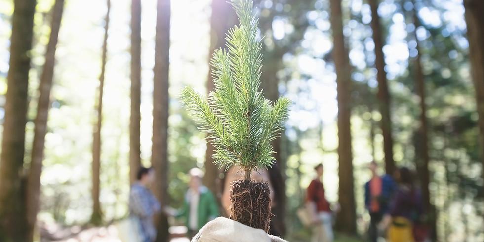 Minneapolis Arbor Day Tree Planting