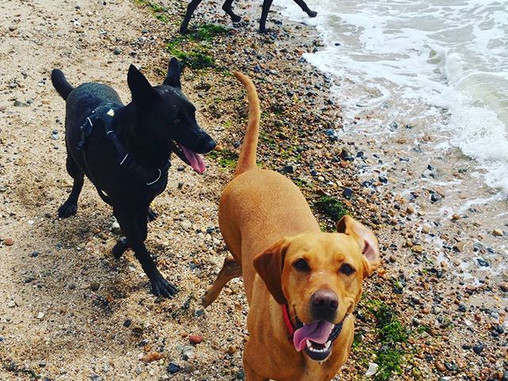 Behind the scenes at Mersea Mutts, Dog Boarding and Training, Colchester Week 4