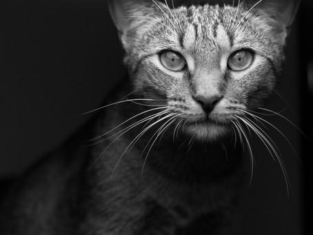 ¡De gatos, gatos y mas gatos!