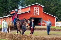 Celisse Equestrian - Horse Staff