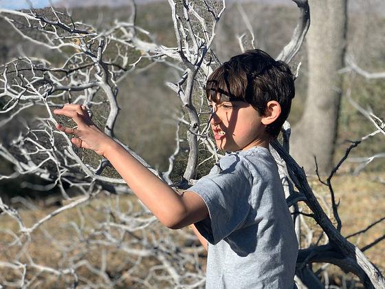 Isaiah Tree.jpeg
