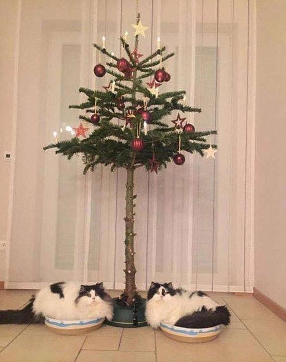 pet-proof christmas trees