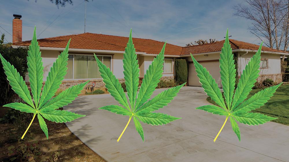 Marijuana Grow House