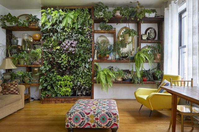 The living wall in an apartment Gennaro Brooks-Church rents in Brooklyn.
