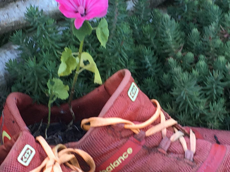 Col's Blog: How to make your running shoes last...