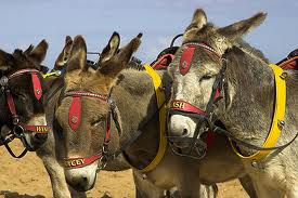 donkeys on the beach at caravans at Butlins in Skegness