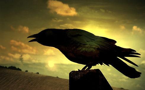 Raven-Field-Mysticism-1800x2880[1].jpg