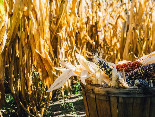 Shavuot- La festividad agrícola y de la entrega y recepción de la Tora
