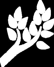 kvist 1.png