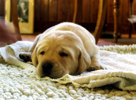 3 consignes simples pour rendre votre chien / chiot propre !