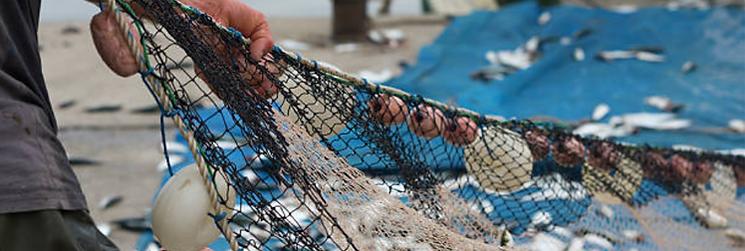 red-de-pescador