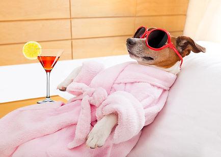 Dog Spa Wellness.jpg