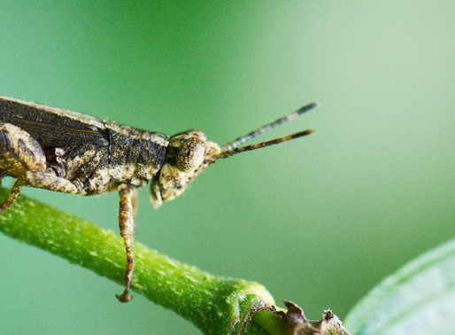 A Taste of the Edible Insect Industry