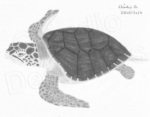 Desenho - Tartaruga feito a Mão Livre