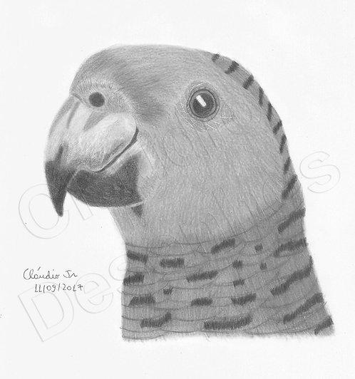 Desenho - Papagaio feito a Mão Livre