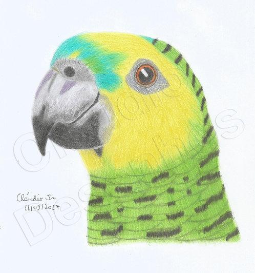 Papagaio - Desenho feito a Mão Livre