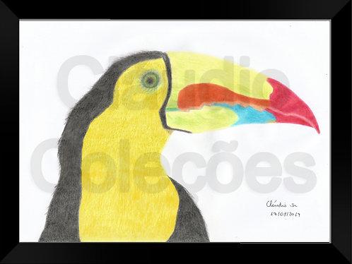 Quadro - Tucano - Desenho a Mão-livre