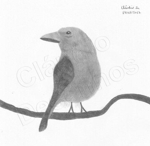 Desenho - Pássaro feito a Mão Livre