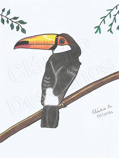 Tucano - Desenho feito a Mão Livre
