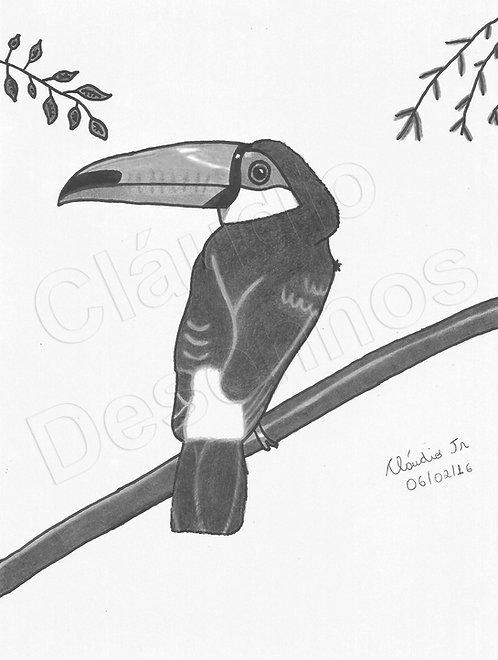 Desenho - Tucano feito a Mão Livre