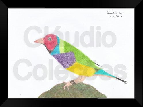 Quadro - Pássaro - Desenho a Mão-livre